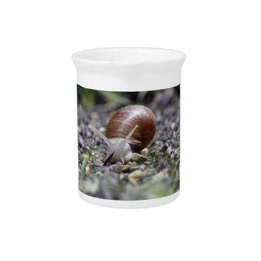 Snail Photo Beverage Pitchers