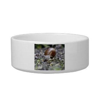 Snail Photo Bowl