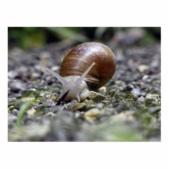 Snail Photo Cutout