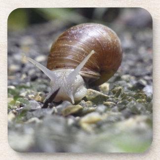 Snail Photo Drink Coaster