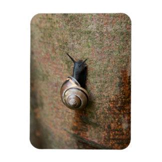 Snail photo magnet
