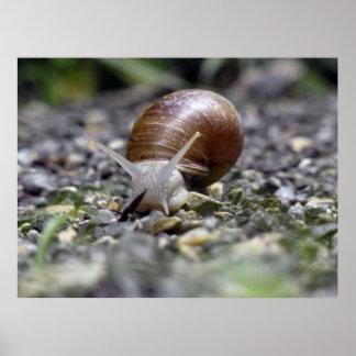 Snail Photo Print