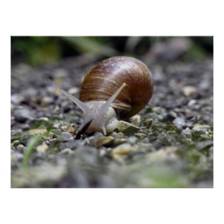 Snail Photo Posters