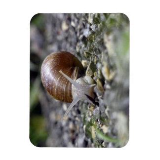 Snail Photo Rectangular Photo Magnet