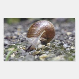 Snail Photo Rectangular Sticker
