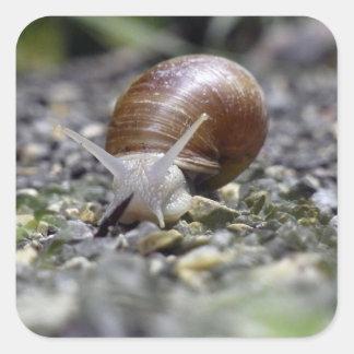 Snail Photo Square Sticker