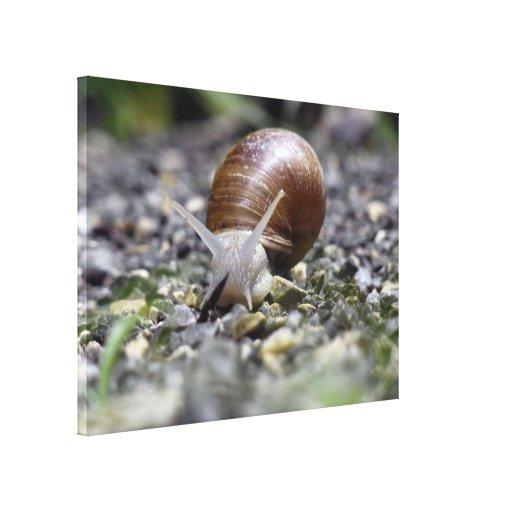 Snail Photo Stretched Canvas Prints