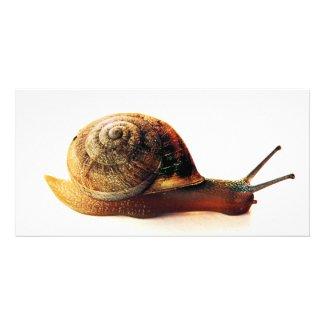 snail photocard