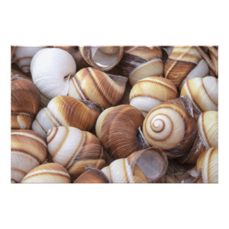 Snail Photographic Print