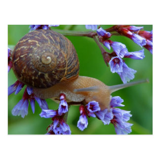 Snail Postcard Picture