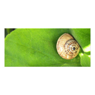 Snail Rack Card