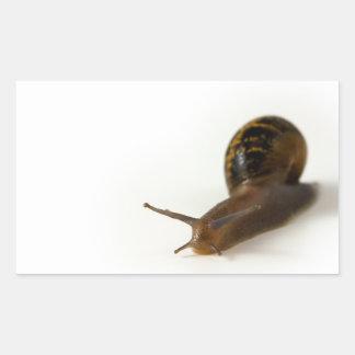 Snail Rectangular Sticker