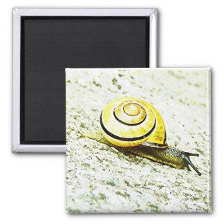 Snail s Pace Fridge Magnet
