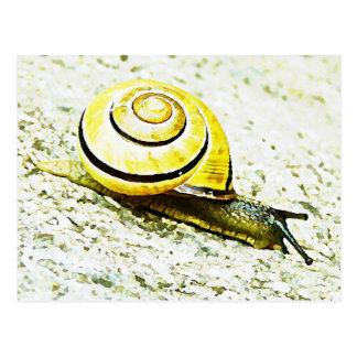 Snail s Pace Postcards