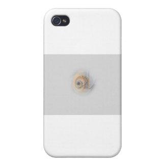 snail Schnecke Muschel Shell iPhone 4/4S Covers