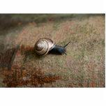 Snail sculpture photo cutout