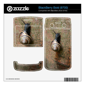 Snail Decal For BlackBerry Bold