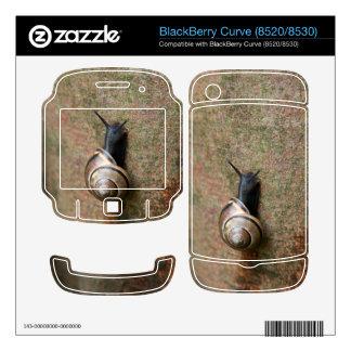 Snail BlackBerry Curve Skins