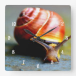 Snail Square Wall Clock