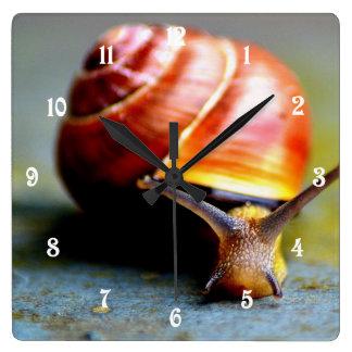 Snail Square Wall Clock