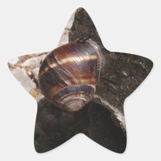 Snail Star Sticker