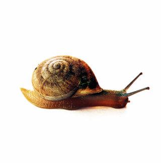 Snail Statuette