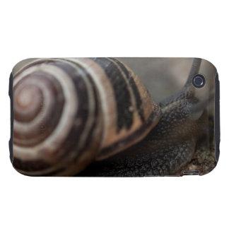 Snail Up Close iPhone 3 Tough Cover