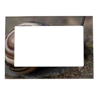 Snail Up Close Magnetic Photo Frame