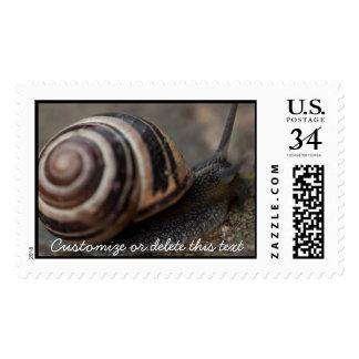 Snail Up Close Postage