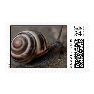 Snail Up Close Postage Stamp