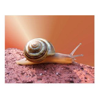 Snail w/ray ~ postcard