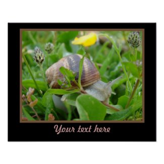 Snail Poster Template