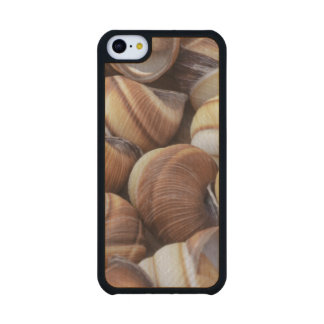 Snail Carved® Maple iPhone 5C Case