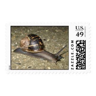 Snailishness Postage
