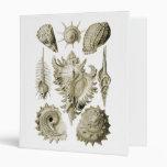 Snails Binders
