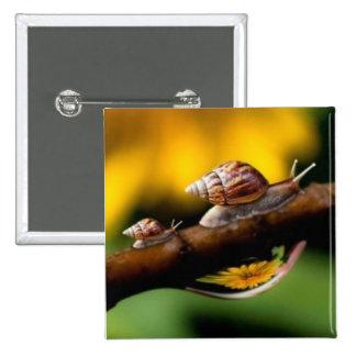 Snails Button