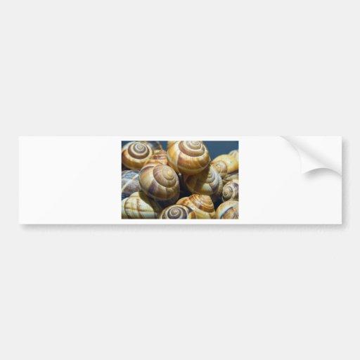 snails car bumper sticker