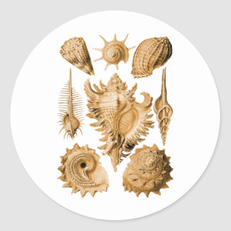 Snails Classic Round Sticker