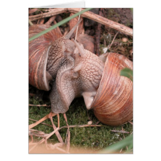 snails in love greeting cards
