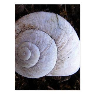 Snailshell fresco tarjetas postales