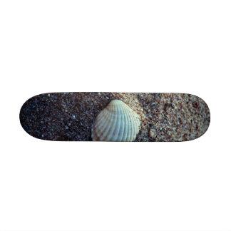 Snailshell Skate Board Decks