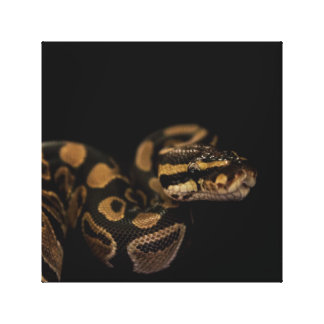 Snake Accent Home Decor