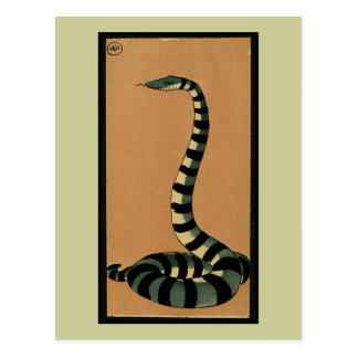 Snake - Antiquarian, Colorful Book Illustration Postcard