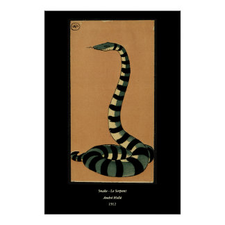 Snake - Antiquarian, Colorful Book Illustration Poster
