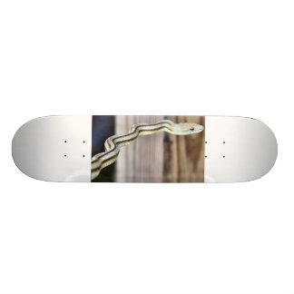 snake board skate board decks