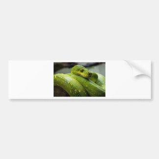 Snake Bumper Sticker