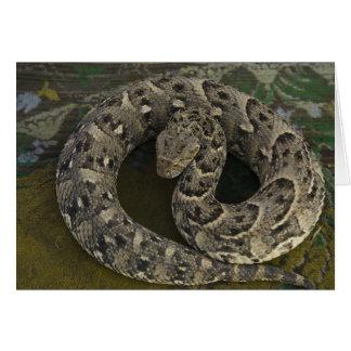 Snake Charmer's African Puff-adder Bitis Card
