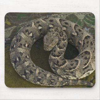 Snake Charmer's African Puff-adder Bitis Mouse Pad