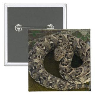 Snake Charmer's African Puff-adder Bitis Pinback Button