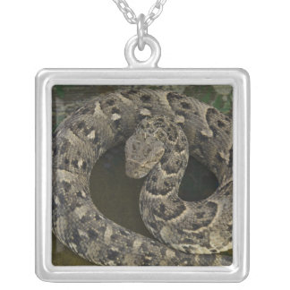 Snake Charmer's African Puff-adder Bitis Silver Plated Necklace